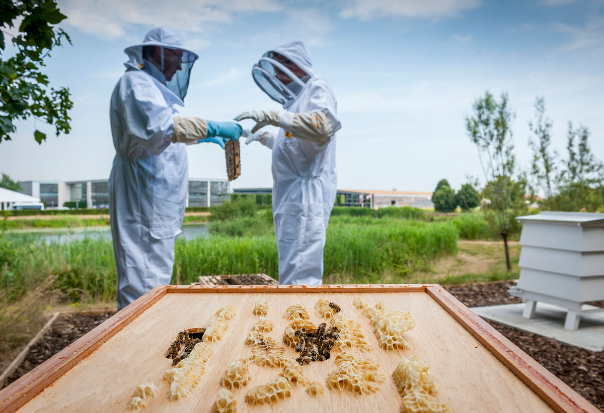 Beekeepers at the Rolls-Royce Apiary, Goodwood