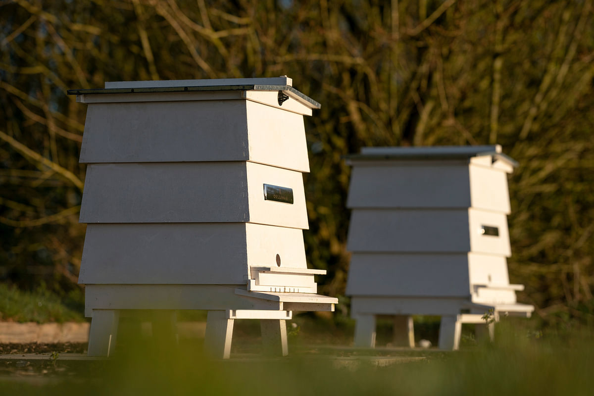 Close-up of the beehives at the Rolls-Royce apiary, Goodwood