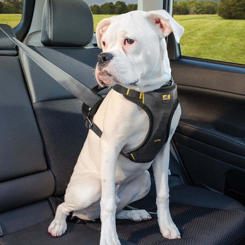 A harness can clip to your car's seatbelt to keep your dogs anchored in place