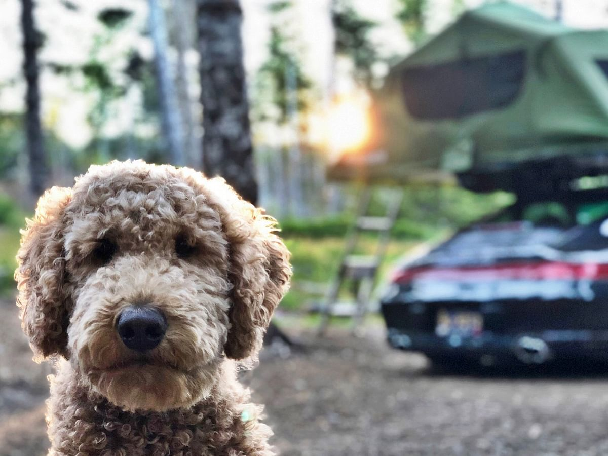 5 tips to make your road trips with your dogs better!