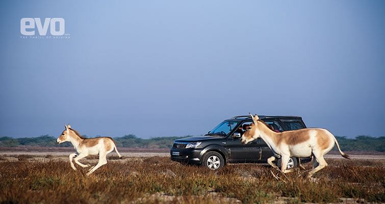 Driving the Tata Safari Storme to Rann of Kutch