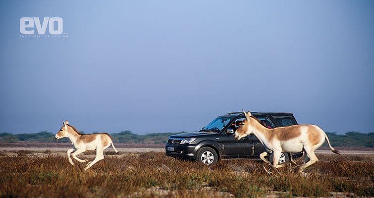 Driving the Tata Safari Storme to Rann of Kutch