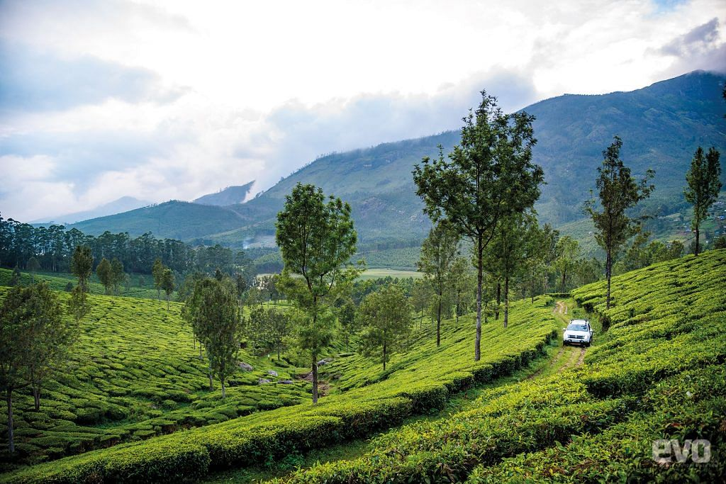 Getting High with the Duster: Driving to the highest tea estate in the world