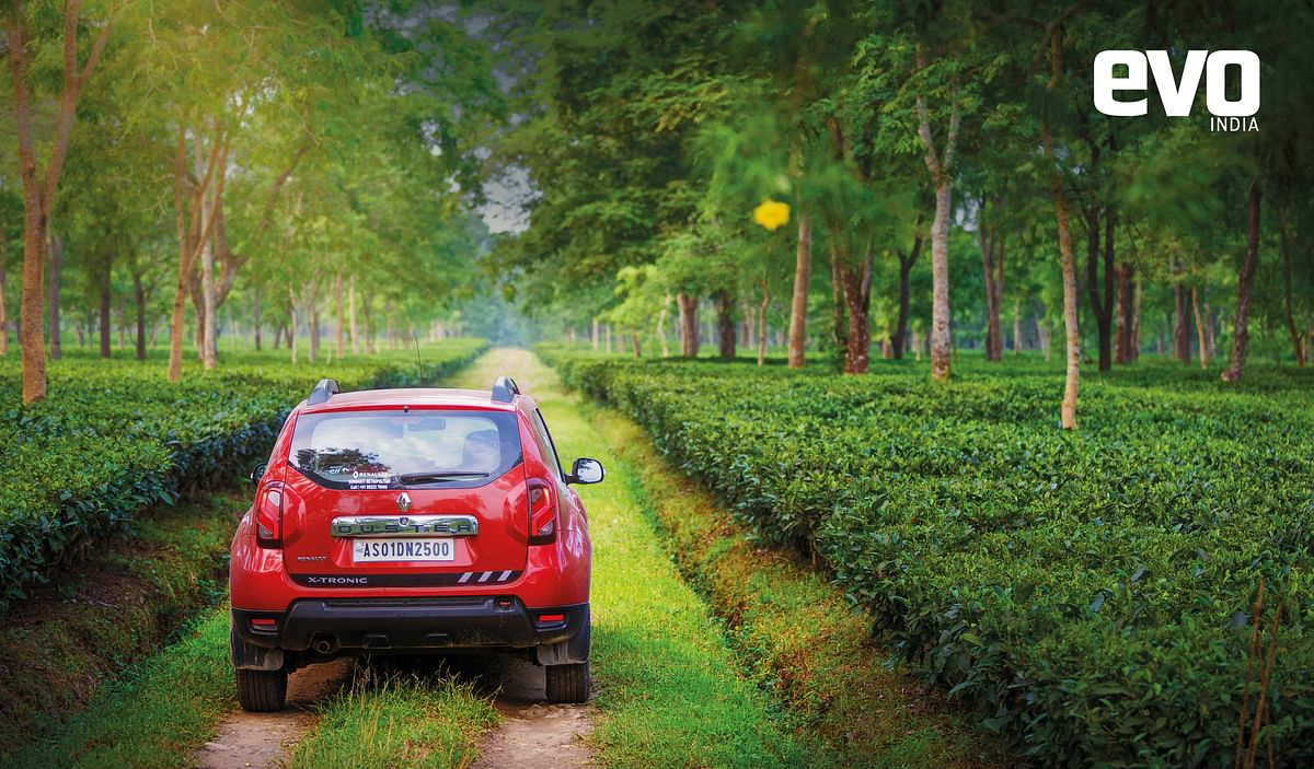 Getting high with the Renault Duster: To the north eastern tea estates