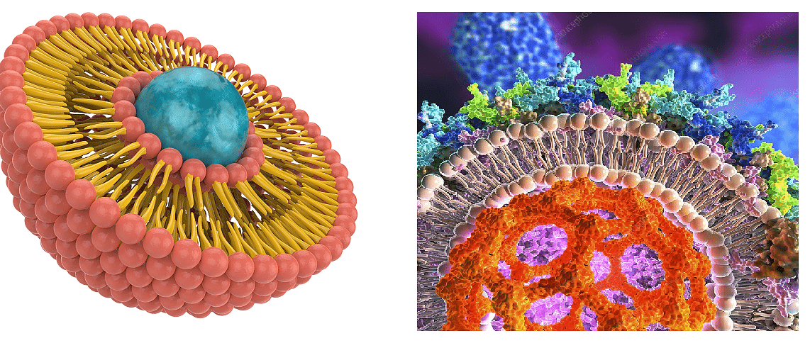 Structure of liposomes and micelles
