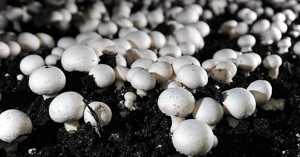 Agri-Tech player Arya organizes training on mushroom cultivation