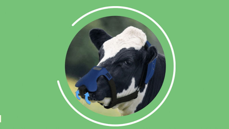 Cargill & ZELP to tackle methane emissions in the dairy industry
