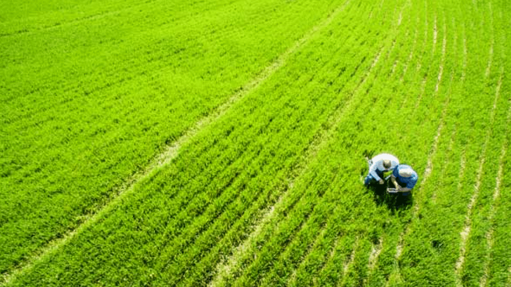 Corbion teams with Truterra & farmers to advance sustainable agriculture