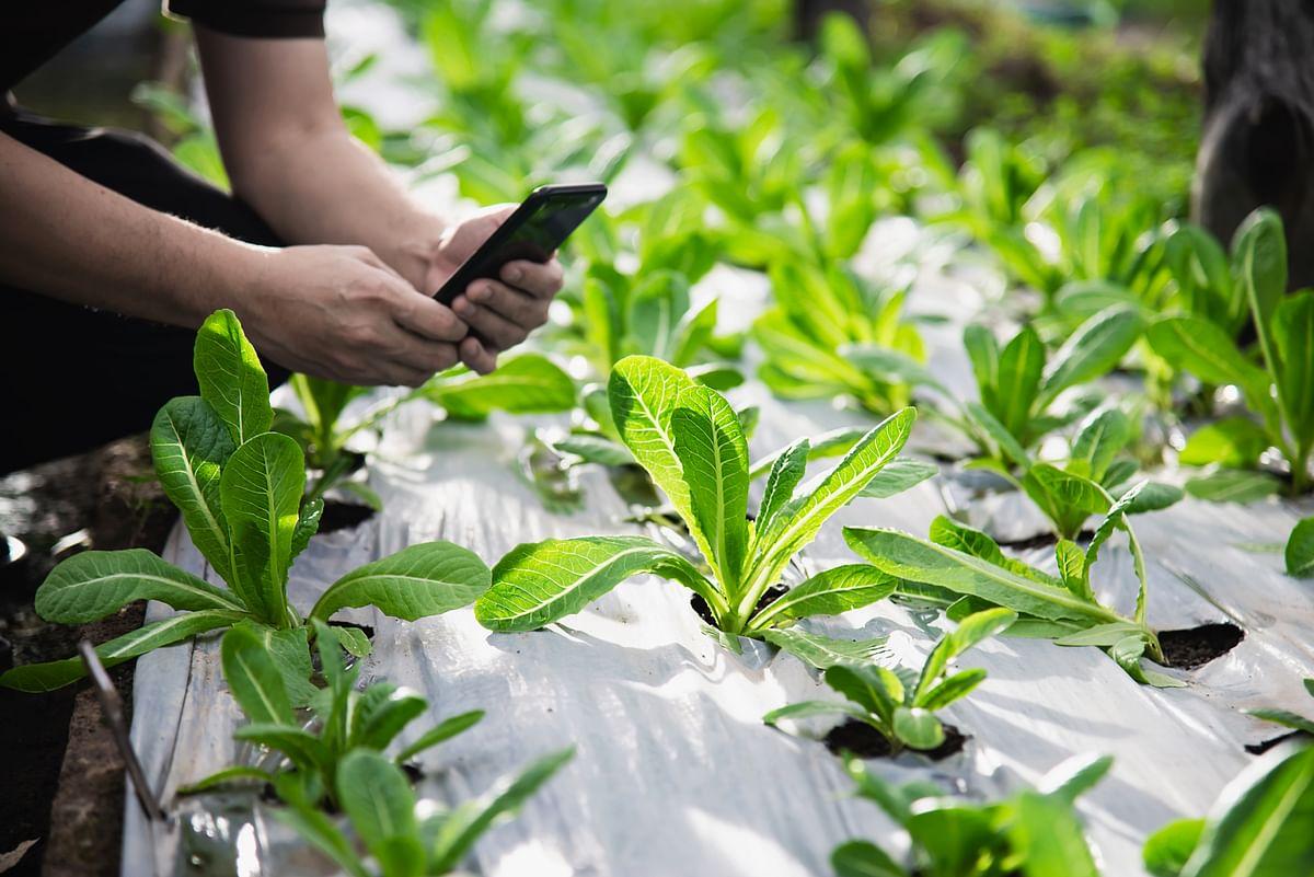 Kezzler & Farmforce partnership brings Field to Fork traceability
