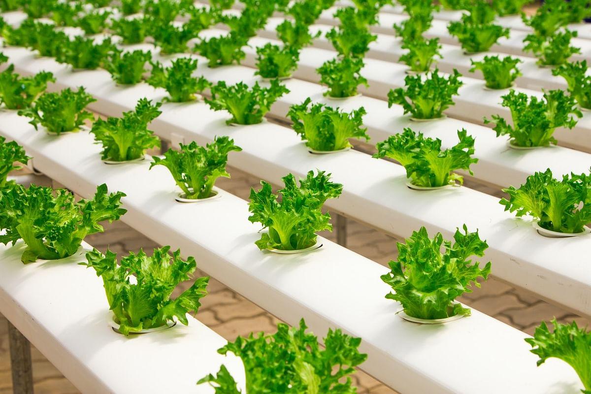 Innovations to boost vitamin B12 in vegan food