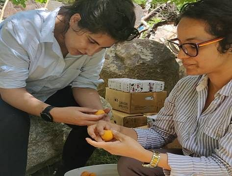 "<div class=""paragraphs""><p>Ladakh Apricot grading and packing</p></div>"