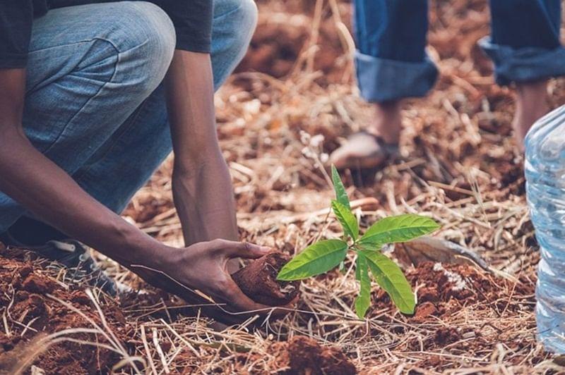 16,000 saplings distributed under green waari project