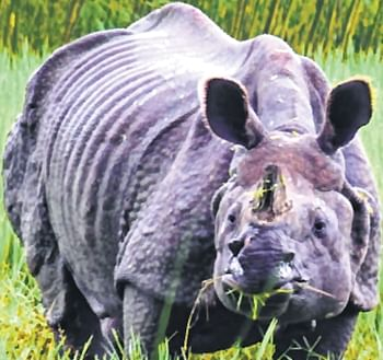 Chitwan National Park is famous for its one-horned rhinos