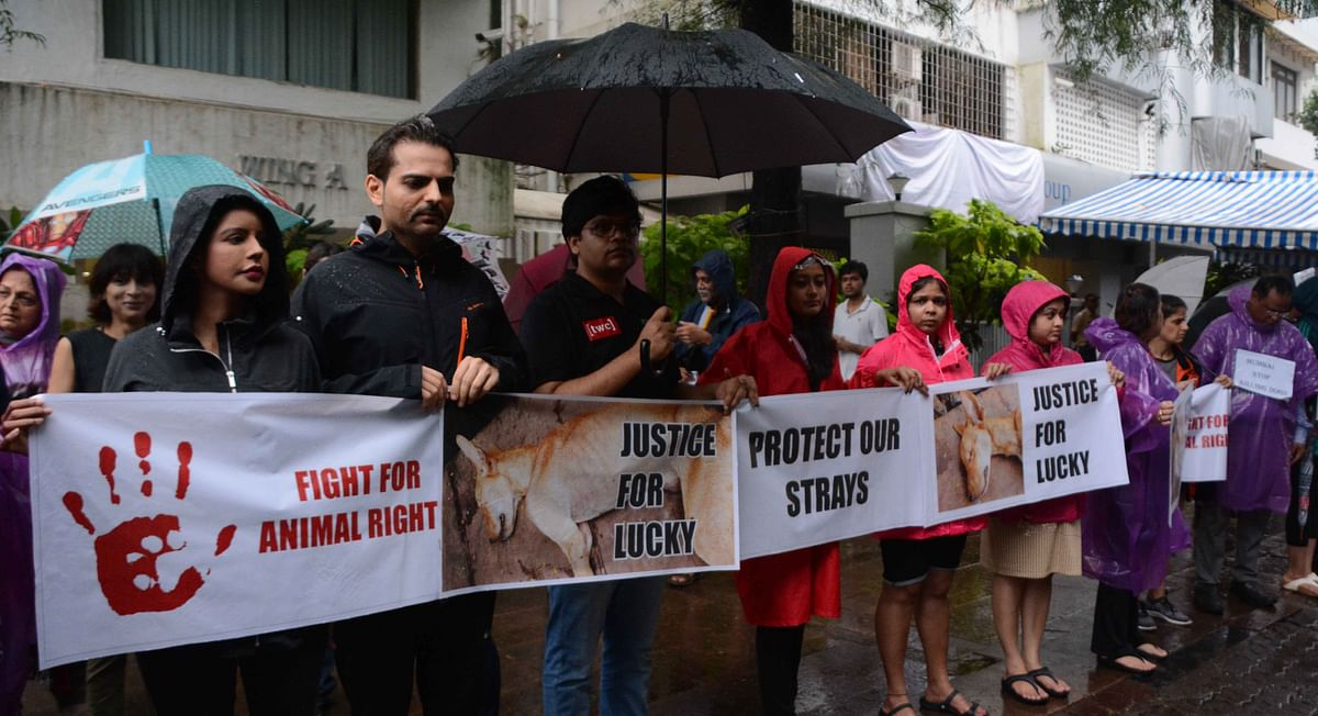 Animal activists protest on ground, Bollywood on Social Media in condemnation of the attack on a stray dog