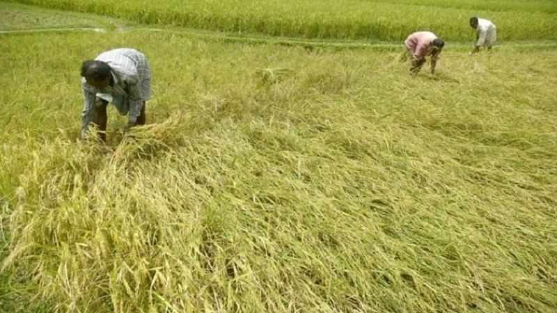 Central team in Maha for crop damage assessment