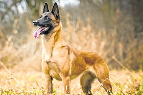 The most expensive dog in CISF's dog squad