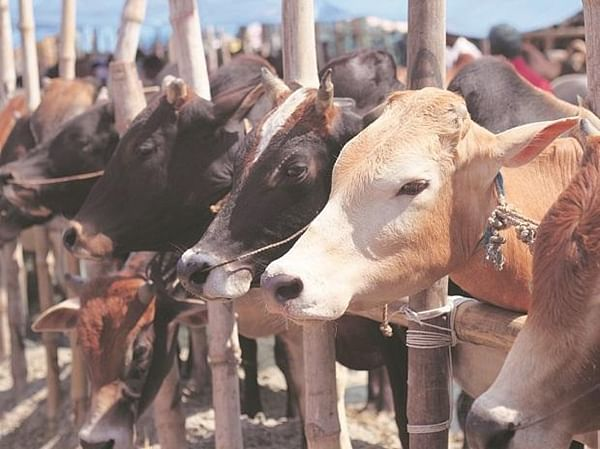 Certificates to cow carriers to check lynching in UP