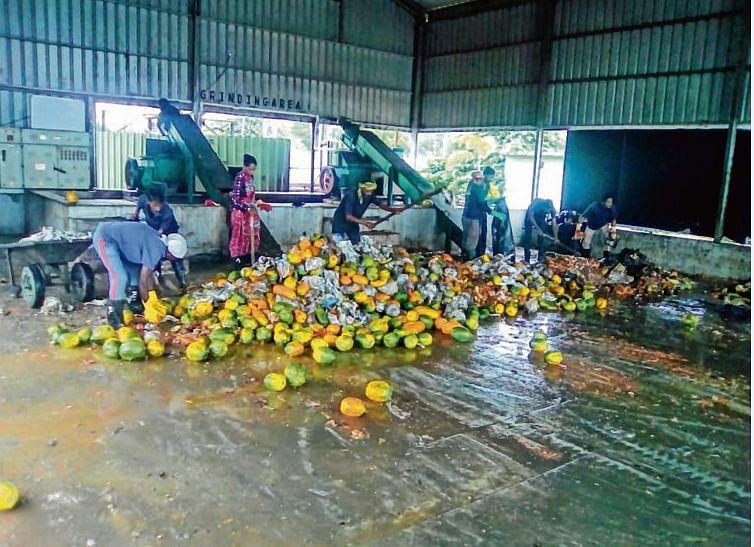 FDA seizes 1,600-kg artificially ripened fruits, destroys 600-kg of papaya