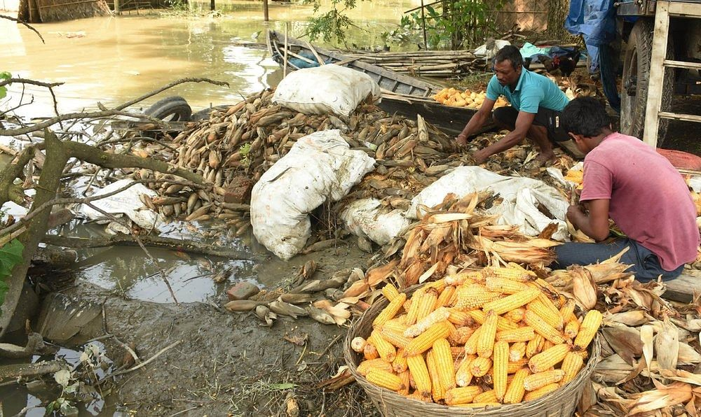 Flood-affected people place Corn on the roadside for drying after vast areas of agriculture land flooded in Kamrup district of Assam