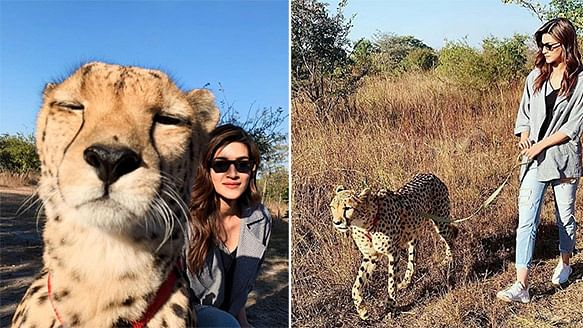 Kriti Sanon reacts on being trolled over Cheetah posts