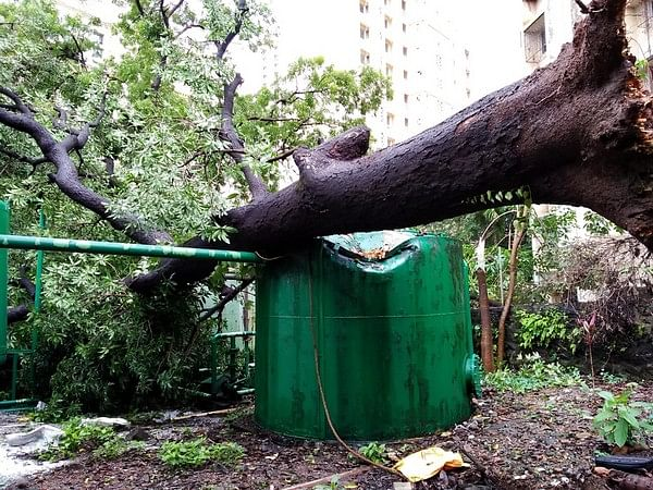 Thane sees maximum number of tree falls in August - Check out previous years data