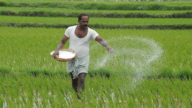 Independence Day gift to farmers: IFFCO cuts complex fertilisers rate by Rs 50 per bag; DAP to cost Rs 1,250/bag