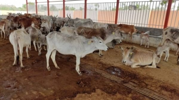 Bhopal: Jaivardhan for enhancing fine for releasing cows on road