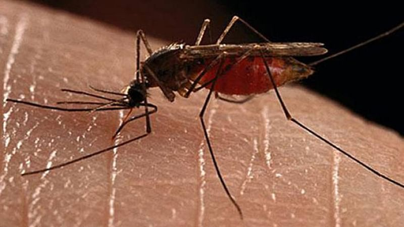 40 people dead in Bangladesh's worst ever dengue outbreak