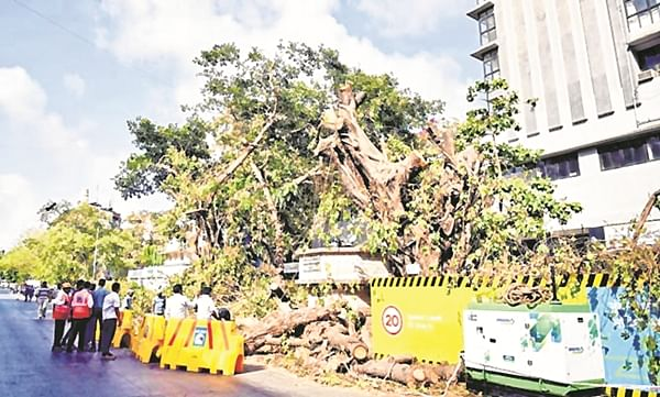 Mumbai: Tree Authority nod to axing of 2,238 trees