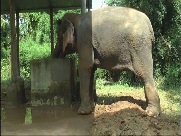 Delhi's last elephant Laxmi sent to rehab in Haryana