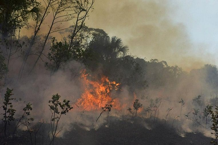 Deforestation of Amazon grew by 222% in August
