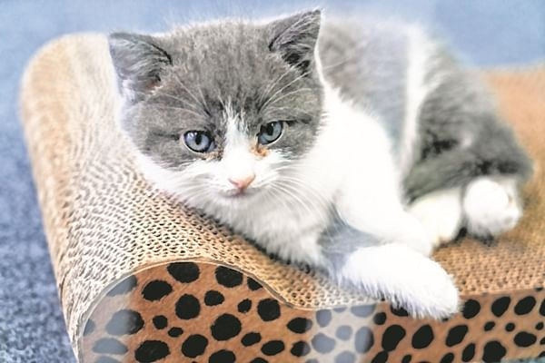 Copy-cat: Owner gets dead kitten cloned