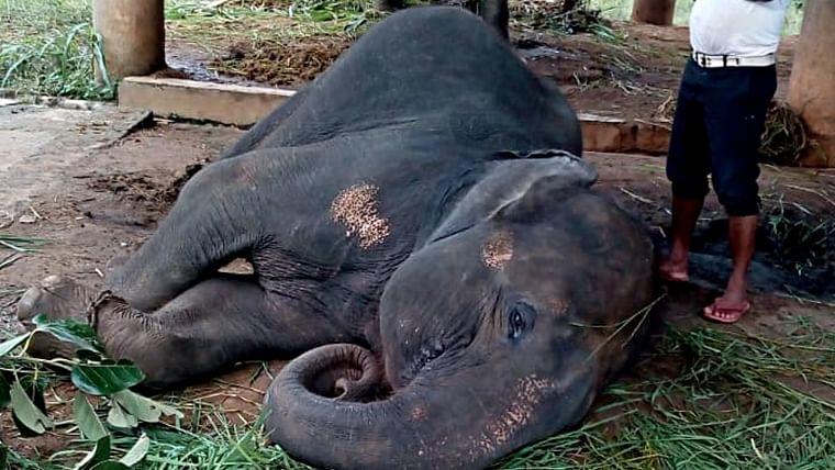 Odisha: Virus attack kills four elephants at Nandankanan Zoo