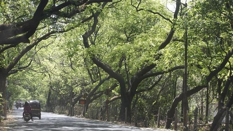Mumbai: Six times more trees means 13110 trees to be newly planted, says MMRC chief Ashwini Bhide