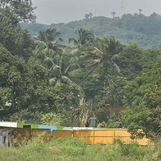 Aarey: Felling of trees to continue, as Bombay HC quashes petition seeking stay
