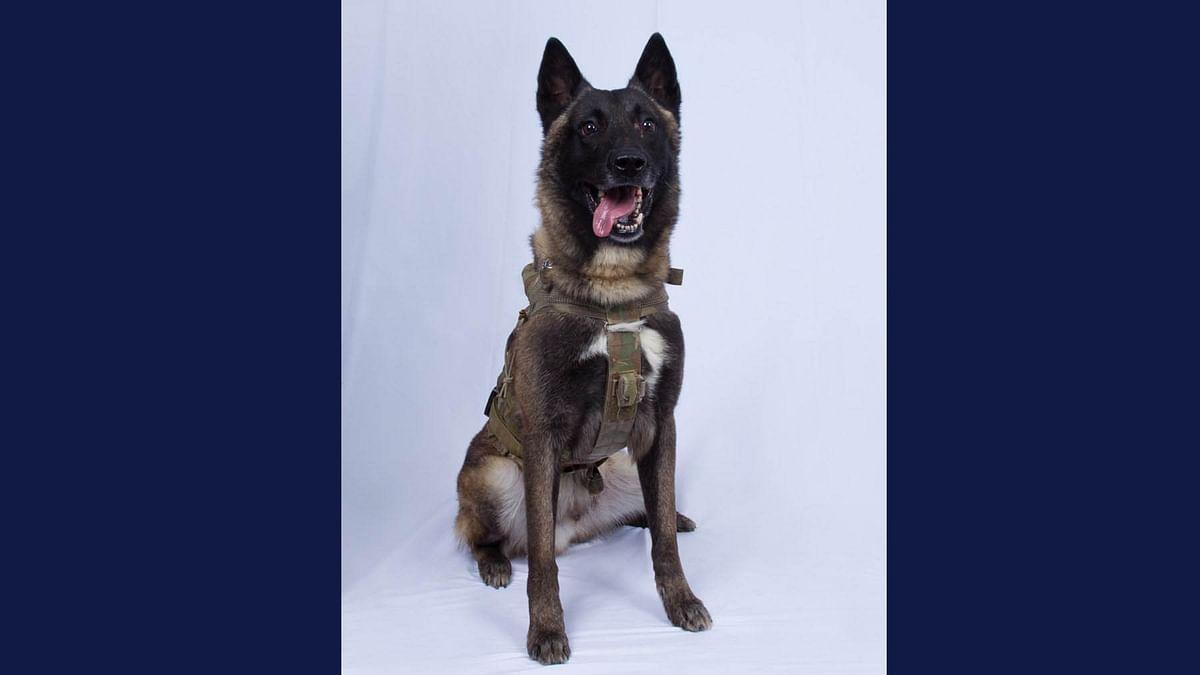 Meet the doggo who took down Baghdadi