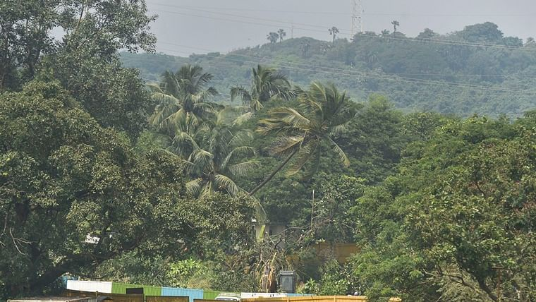 Tree authority passes notice to chop 18 coconut trees at MIAL