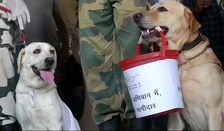 BSF dog squad takes part in Swachhata Abhiyan at bus stand in Jammu
