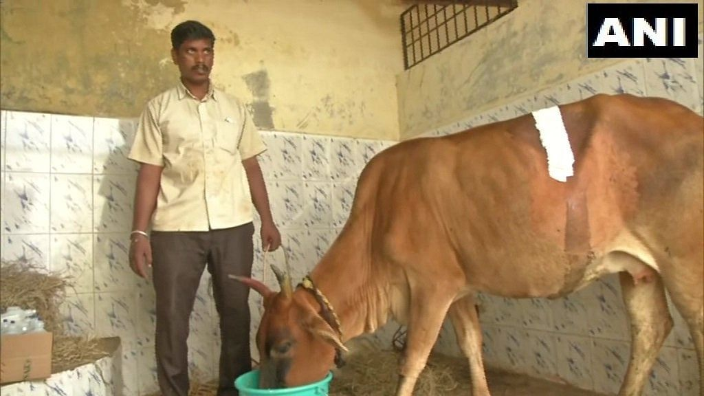 Team of veterinarians perform surgery on cow, remove 52 kgs of plastic waste from inside stomach