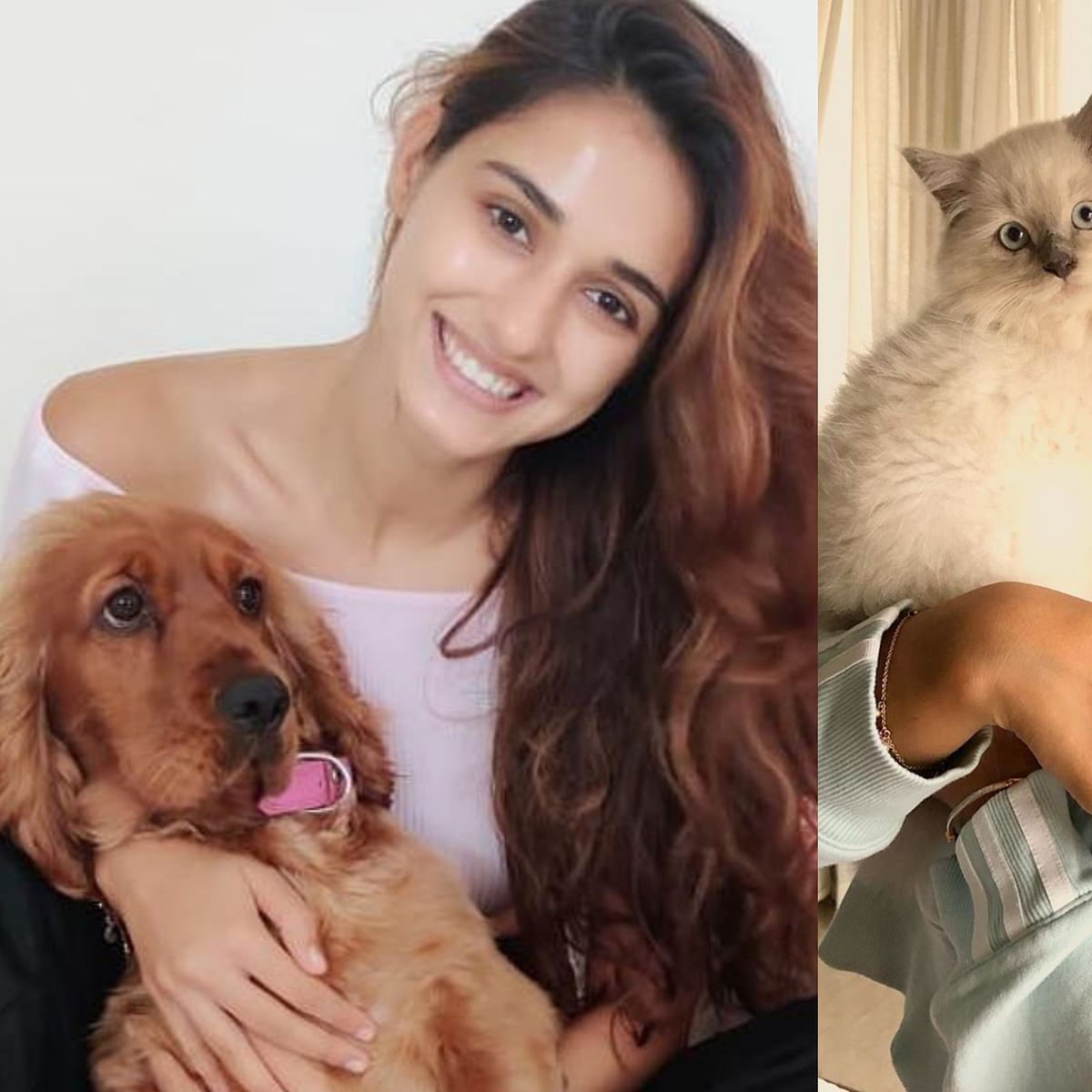 Disha Patani says 'best therapy has fur and four legs', urges fans to raise voice against animal cruelty