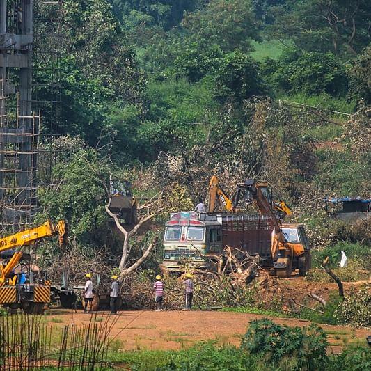 Woke in Aarey, tree cutters in Aurangabad: Sena wants to chop down 1000 trees for a Bal Thackeray memorial
