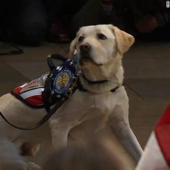 Statue of George HW Bush's service dog soon to be in presidential library