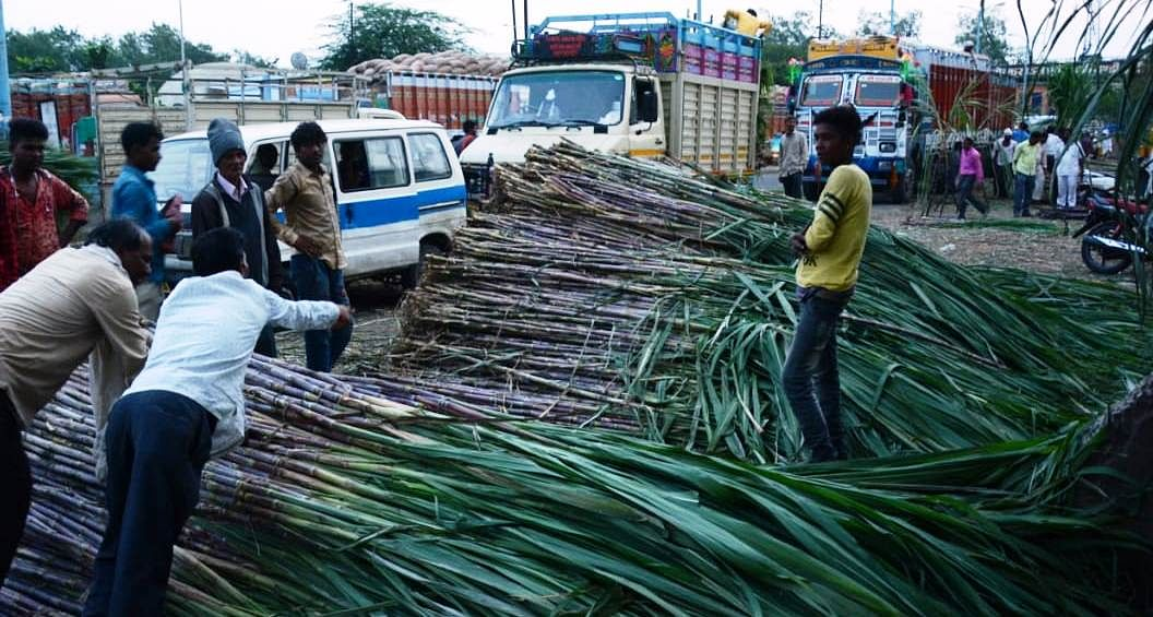 Bunches of sugarcane sold in the city on Thursday for Dev Uthani Gyaras.