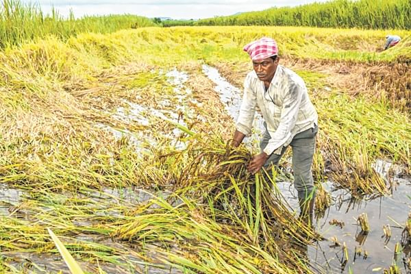 Onion prices near record high as rains hit supply in Lasalgaon