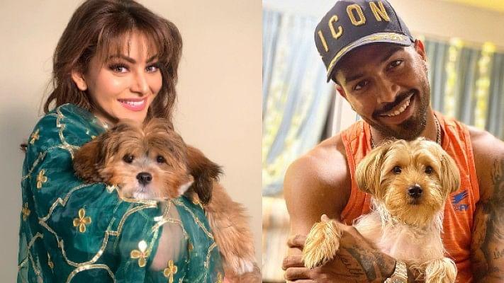 Hardik Pandya gifts rumoured ex-girlfriend Urvashi Rautela a puppy