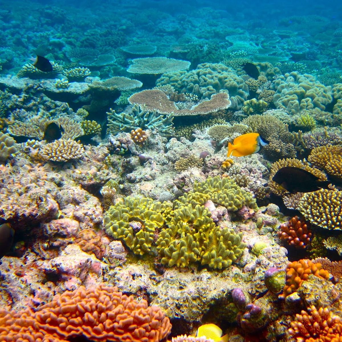 New disease hits coral reefs