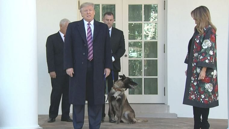 Top dog in town: Baghdadi slayer Conan the canine poses with Trump