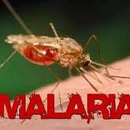 Chemically treated mosquito nets to fight Malaria
