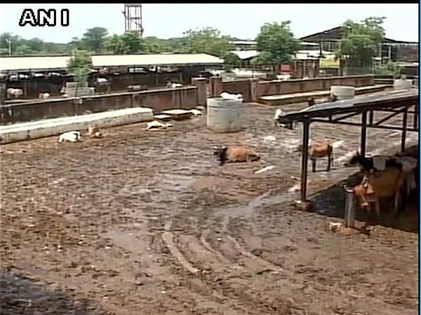 25 cows found dead in UP's Banda shelter