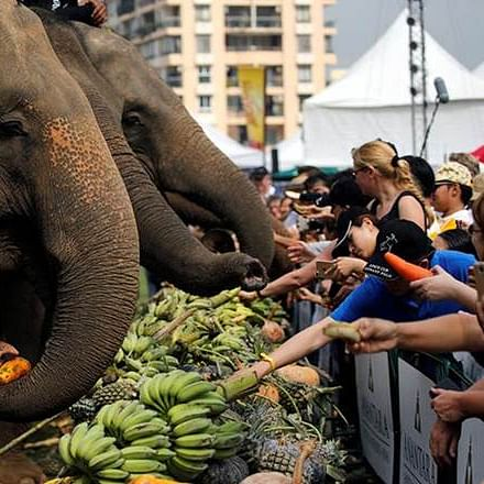 Thailand elephants tamed with  force for lucrative animal tourism